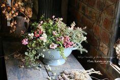 ペルネチアを使って。。。|フローラのガーデニング・園芸作業日記
