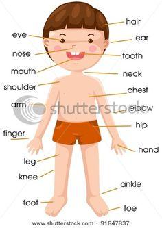 vocabulary part of body