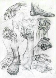 studies by an unknown russian artist Arm Anatomy, Anatomy Art, Drawing Studies, Art Studies, Anatomy Sketches, Art Sketches, Anatomy Reference, Drawing Reference, Life Drawing