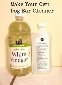 Save money by not needing to go to the vet for ear infections with this dog ear cleaner recipe