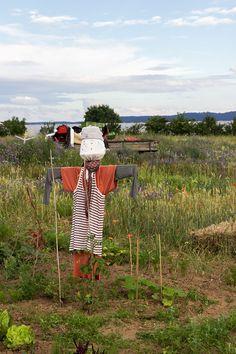Wir lieben unseren Saisongarten mit Kindern und Vogelscheuche Scary Scarecrow, Scarecrows, Tips And Tricks, Kids