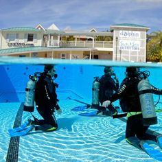 Say yes to scuba diving! | UNEXSO located across the street, offers a wide variety of scuba diving activities for beginners to experienced certified scuba divers.