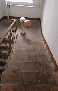 [GIF] For me it's not a problem to climb the steps Cute Puppies, Cute Dogs, Dogs And Puppies, Doggies, Cute Animal Videos, Funny Animal Pictures, Cute Animal Gif, Cute Funny Animals, Funny Dogs