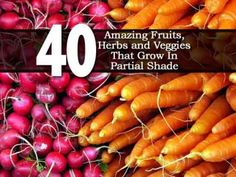 40 Fruits, Vegetables & Herbs That Will Grow in Partial Shade. Many garden crops will do quite well with limited sunlight. These crops will grow with as little as 3 to 6 hours of sun per day, or constant dappled shade. While size or yields may be affected in some instances, taste will be just as good. #gardening #shadeplants