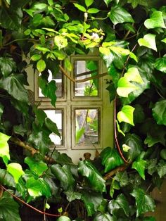 Garden window tucked into ivy, Lovely! Old Cottage, Cottage In The Woods, Cottage Gardens, Woodlands Cottage, Irish Cottage, Carmel By The Sea, Stone Path, Diy Garden, Moss Garden