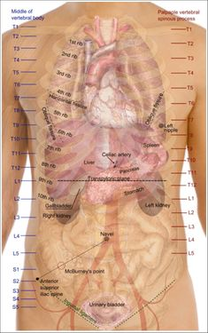 Human Organs Diagram Back View | Health and Wellbeing | Pinterest