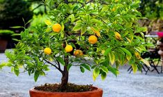 Groupon Goods Global GmbH: Set van 2, 4 of 8 mediterrane fruitbomen