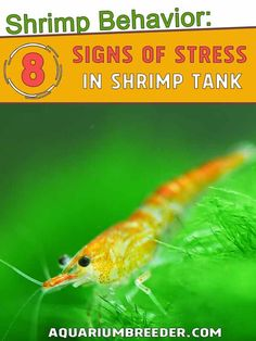 8 Signs Your Shrimp is Suffering from Stress Shrimp Tank, Signs Of Stress, 8th Sign, Cool Pictures, Snail, Animals, Animales, Animaux, Animal