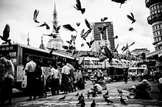Pigeons of Downtown Yangon - Colonial Architecture, Yangon, Urban Life, Southeast Asia, Times Square, Old Things, City, Travel, Image