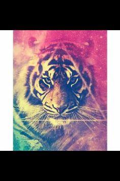 molaaa el tigre representa a muchas personas que hay aqui