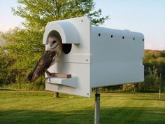 Old Fashioned Rodent Control:  The Barn Owl.  Invite them to your property and you'll have no need for poison or traps.  The plastic Barn Owl Box is lightweight and long lasting