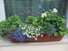 Június_093 House Colors, Container Gardening, Plants, Colorful, Pictures, Plant, Container Garden, Planets