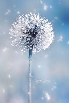 Icequeen -