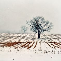 Landscape Photography Winter Farm 5x5 Print Tree by birdandbloke, $14.00  The colors and lines are particularly striking, almost moving into abstraction.  Incredibly serene.