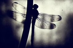 I love Dragonflies!  They mean good luck!
