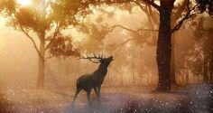 Der Ruf des Hirsches