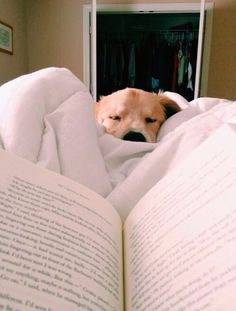 Some day ! A dog to cuddle with while I read!