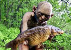Lord of the Carp