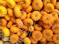 Pumpkin patch on the way to Santa Cruz