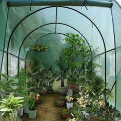 Shop for Heavy Duty Greenhouse Plant Gardening Dome Greenhouse Tent. Walk In Greenhouse, Portable Greenhouse, Greenhouse Plants, Backyard Greenhouse, Greenhouse Wedding, Greenhouse Kitchen, Outdoor Plants, Outdoor Gardens, Indoor Gardening