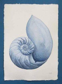 Original watercolour painting of a chambered nautilus sea