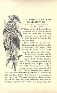 1 - Familiar wild flowers figured and described - Biodiversity Heritage Library