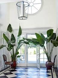 painting concrete floors - Google Search Interior Plants, Interior Exterior, Interior Design, Indoor Trees, Plants Indoor, Potted Plants, Indoor Gardening, Estilo Tropical, Tropical Style