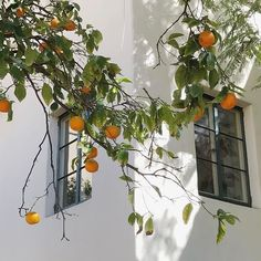 Ideas Plants Photography Art Inspiration For 2019 European Summer, Italian Summer, Mode Collage, Wall Collage, What A Nice Day, Photowall Ideas, Northern Italy, Summer Aesthetic, Orange Aesthetic