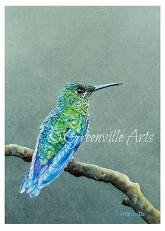 Hummingbird Print 5x7 of watercolor painting by GreenvilleFineArts
