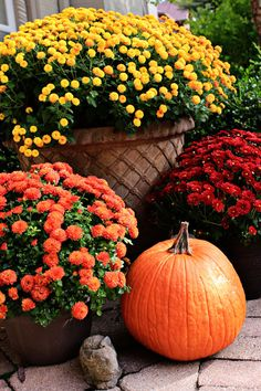 Fall Flowers . Potted Containers . county-line-road.com