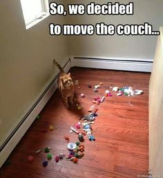 So We Decided To Move The Couch cute memes animals cat cats adorable animal kittens pets kitten funny pictures funny animals funny cats Funny Animal Memes, Cute Funny Animals, Funny Cute, Cute Cats, Funny Dogs, Funny Memes, 9gag Funny, Animal Humor, Animal Quotes