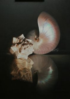 """Contemporary Drawing - """"Pearl Nautilus"""" (Original Art from Cecile Baird)"""