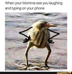 Funny Video Memes, Crazy Funny Memes, Funny Animal Memes, Stupid Funny Memes, Funny Relatable Memes, Funny Posts, Funny Animals, Funny Stuff, All Meme