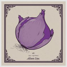 Onion Print 10x10 art, purple, screenprint