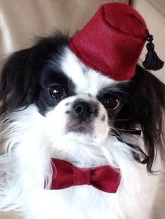 Dog Fez & Bow Tie Set Dog Hat Small  by Doginafez on Etsy