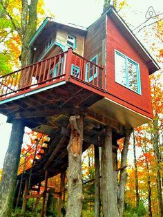 tree house hotel