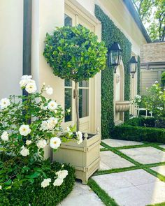 Landscaping With Roses, Country Landscaping, Front Yard Landscaping, Landscaping Ideas, Front Garden Landscape, Landscape Design, White Roses, White Flowers, Rose Hedge