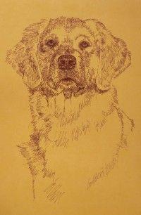 Golden Retriever by Artist Stephen Kline