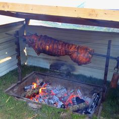 Roasted pig. That's what I'm talking about!