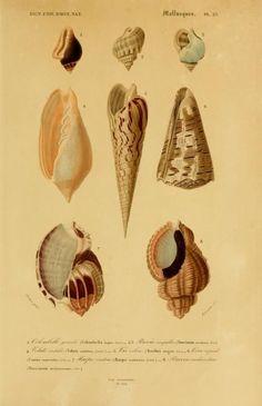 Atlas: v. 3, Ed. 2 - Zoologie, Botanique, Astronomie & Meteorologie - Dictionnaire universel d'histoire naturelle résumant et complétant tou...