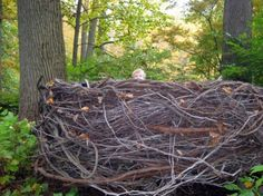 Winterthur gardens, giant kids' nest