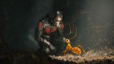 Ant-Man | The 20 Biggest Movies Of 2015 According To Tumblr