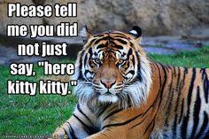 Uh... nice kitty?