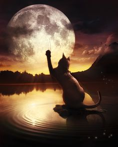 scratchin' the moon...