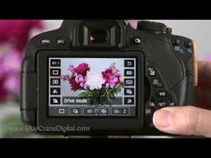 The T5i's Live View feature is a powerful tool that can help you take better photos.  Understanding what the Live View display icons mean and how to change the settings will help you be more efficient in your photography.  This is a short clip from our Canon T5i/700D: Basic Controls training DVD, streamable video and app.  The clip provides an overview of the T5i's Live View display.  Visit our website for more detailed information.  http://www.BlueCraneDigital.com