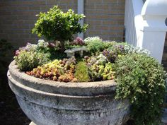 Amazing Miniature Gardens | Just Imagine - Daily Dose of Creativity.  I like the wild look of this one. Real.  Not so manicured.