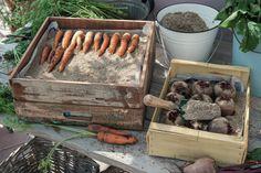 Nicht jedes Gemüse muss nach der Ernte gleich eingekocht oder eingefroren werden. Viele Gemüse-Arten kann man auch über Monate lagern. Der Vorteil: Vitamine und andere gesunde Inhaltsstoffe bleiben fast vollständig erhalten. Hier stellen wir Ihnen die wichtigsten Lagermethoden vor.