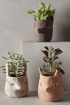Forest animal pots.