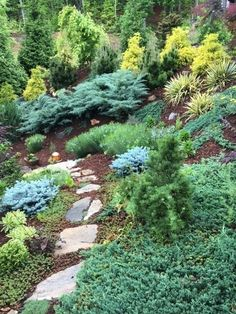 'Grey Owl' juniper, 'Golden Mop' chamecyparis, 'Thunderhead' pine, and dwarf globe blue spruce. (Nancy Martemucci garden, Fairview, picture provided by Martemucci.)