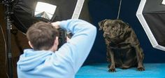 Professional Photographers are Snapping Pics and Saving Shelter Pets' Lives | Dogster